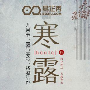 中国风节气寒露节气宣传