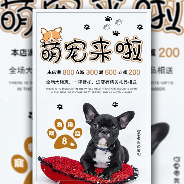 宠物狗萌宠促销简约时尚宣传